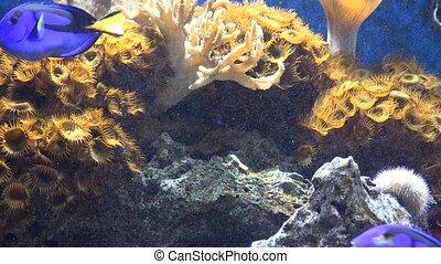 Fish Tank or Aquarium