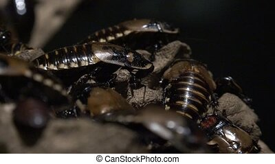 Cockroaches or Similar Insects