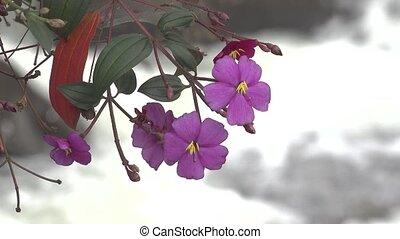 Purple or Violet Wild Flower