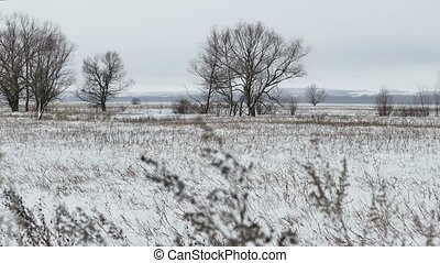 Field with grass Russia and snow away dead trees winter landscape