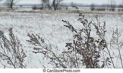 dry grass field in snow winter nature landscape - dry grass...