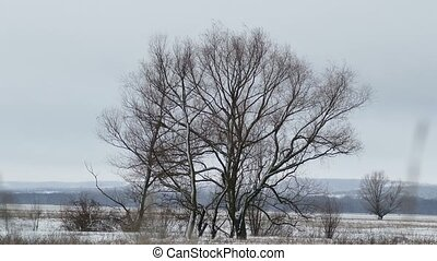 dry tree standing in  field of winter snow wind