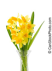Bouquet of yellow daffodils in glas