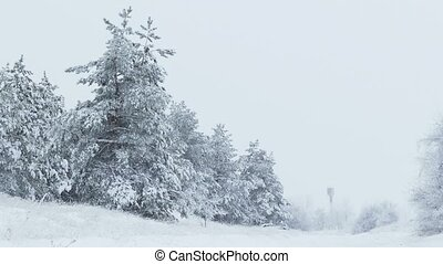 fir winter trees in snow wild forest snowing Christmas - fir...