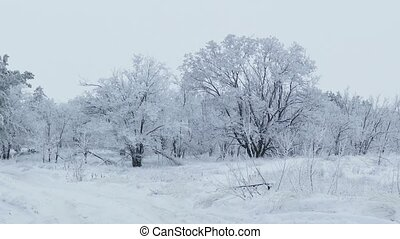 beautiful forest nature of trees in the snow winter...