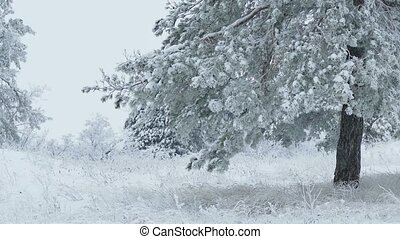 fir tree in snow wild forest Christmas winter branch snowing...