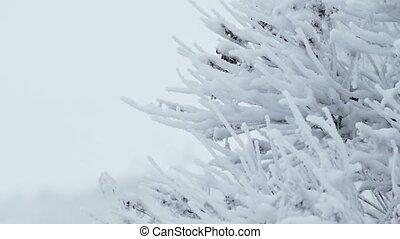 ice frozen grass snow winter pretty - ice frozen grass snow...
