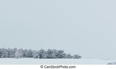 forest nature beautiful of trees snow winter christmas -...