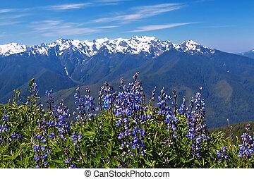 Hurricane Ridge, Olympic National Park, Washington, USA