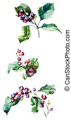 hawthorn berries watercolor - hawthorn branch close up on...