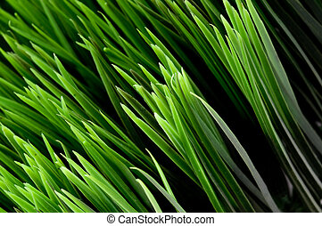 Tilted close-up view of blades of green grass