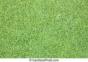 Golf Courses green lawn natural outdoor green
