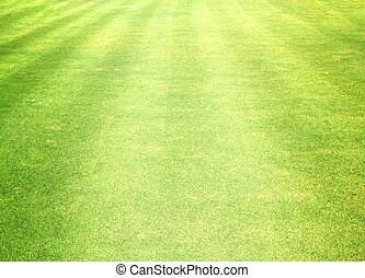 Golf Courses green lawn natural outdoor green.