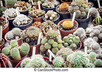 Various cacti mix in the greenhouse Natural theme Detail...