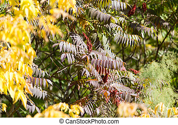 leaves on the tree in nature in autumn