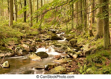 Harz National Park - the River Ilse at Ilsenburg in the Harz...