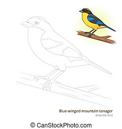 Blue winged mountain tanager draw vector - Blue winged...