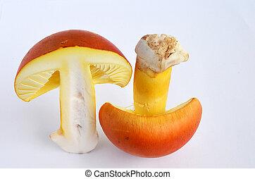 Edible Amanita Caesarea or Caesars Mushroom 3 - Amanita...