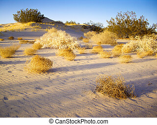 Tumbleweeds of Mojave Desert - Tumbleweeds in afternoon...