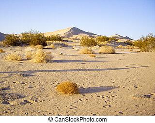 Mojave desert vista - Mojave Desert dunes and flora