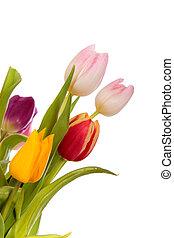 Wielkanoc, tulipany, brzeg