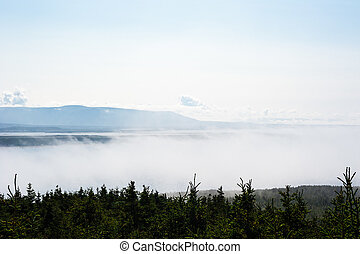 Low fog between trees and distant mountain range - Low fog...