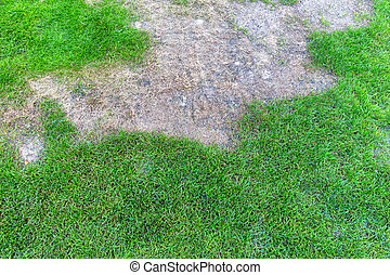 broken lawn - wiese was sprayed with a herbicide lawn...