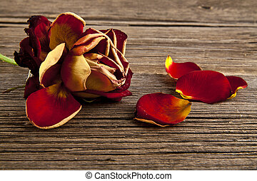 withering rose on a wooden background