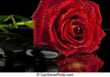 red rose and stone