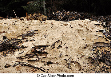 Sawdust in the forest