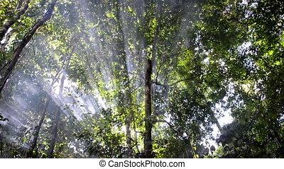 Rays of Light and Smoke