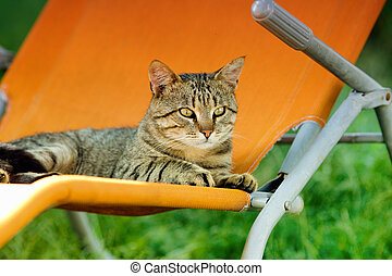 Tabby cat on sunbed - Cute tabby cat lying on orange sunbed...
