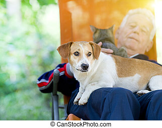 Senior man with dog and cat - Senior man lying in sunbed in...