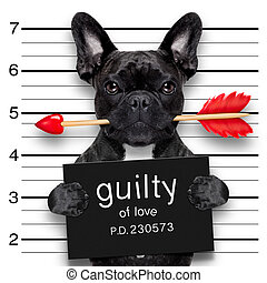 valentines mugshot dog - valentines bulldog dog with rose in...
