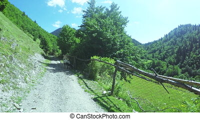 Fence in mountains with dog - Wooden fence with barbed wire...