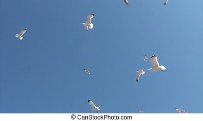 Seagulls attacking from above - Seagulls are attacking from...