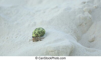 Hermit crab crawling on the sand, Thailand, Similan Islands