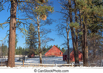 Classic red winter barn and pine trees