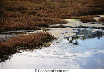 Salt marsh - A marshy and swampy saltmarsh meadow with herbs...