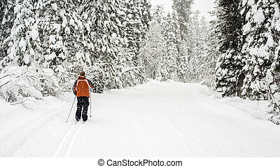 Falling snow on a ski trail in the Idaho mountains - Cross...