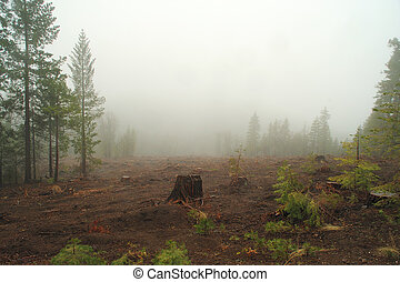 Misty Logged Forest - A single tree stump left in a cleared...