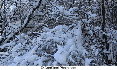 Beautiful snow covered trees in winter park Horizontal...