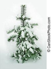 Snowy forest. fir Tree