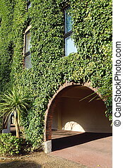 Building covered with ivy