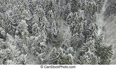 Flying Above White Snowy Forest - Winter shot of trees...