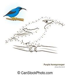 Purple honeycreeper draw vector - Purple honeycreeper learn...