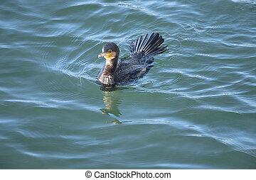 waterfowl - Brilliant, elegant, agile in the divine...