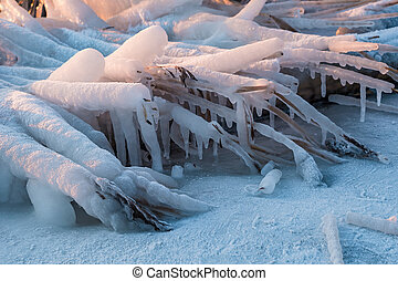 Frozen reeds on a river in winter