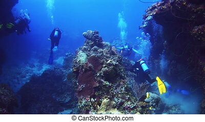 Group of divers swimming along the reef in Bahamas Amazing,...