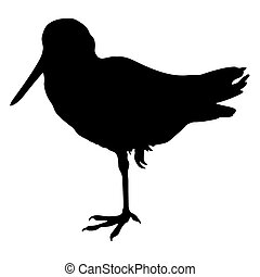 Great Snipe Silhouette - Birds Silhouettes Vector EPS 10
